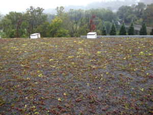 Breakell Inc.'s new green roof.