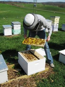 Basic hive inspections are routine tasks for beekeepers. (Mark Chorba)